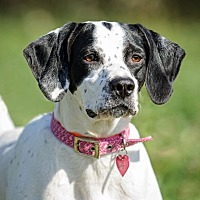 Adopt A Pet :: Lady Monica - Wood Dale, IL