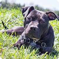 Adopt A Pet :: Smiley - Grand Rapids, MI