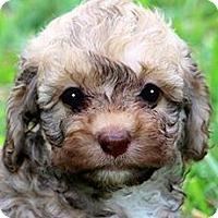 Adopt A Pet :: ANNIE(OUR LITTLE