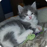Adopt A Pet :: Athena - Melbourne, FL