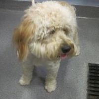 Adopt A Pet :: Louie - Wantagh, NY