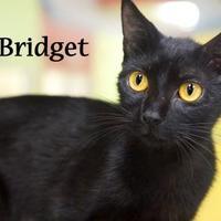 Adopt A Pet :: Bridget (Bottom) - Gulfport, MS