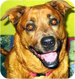 Labrador Retriever/Rottweiler Mix Dog for adoption in Guelph, Ontario - Josie