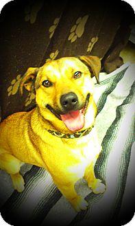 German Shepherd Dog Mix Dog for adoption in Lake Odessa, Michigan - Zeek