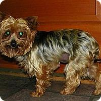Adopt A Pet :: Katie Perry - Mt Gretna, PA