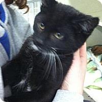Adopt A Pet :: Snitch - Riverhead, NY