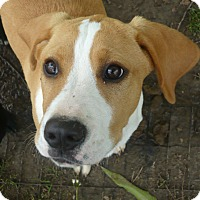 Adopt A Pet :: GABBY - Pawling, NY