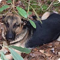 Adopt A Pet :: Lovey - Arden, NC