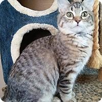 Adopt A Pet :: Skye - Farmington, AR