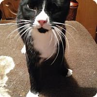 Adopt A Pet :: Fergus - Farmington, AR