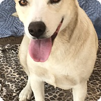 Adopt A Pet :: Minnie - East Hartford, CT