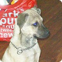 Adopt A Pet :: Shep - Mexia, TX
