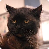 Adopt A Pet :: Busta - Winchendon, MA
