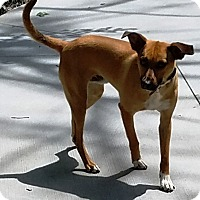 Adopt A Pet :: Rolo - Kalamazoo, MI