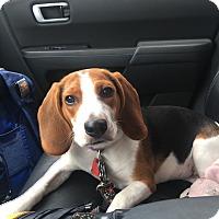 Adopt A Pet :: Janelle - Houston, TX