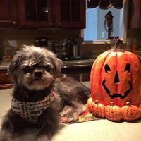Adopt A Pet :: Murphy - La Plata, MD