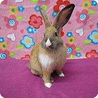 Adopt A Pet :: Hiya - Scotts Valley, CA