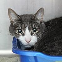 Adopt A Pet :: Thomas - Warwick, RI