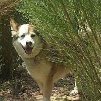 Adopt A Pet :: Loch - Las Vegas, NV