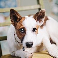 Adopt A Pet :: Jaymes - Portland, OR