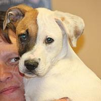 Adopt A Pet :: Donna Winston - Jewett City, CT