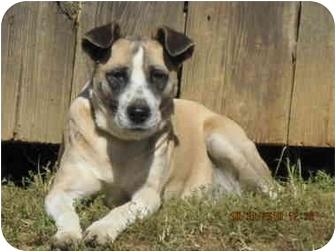 Terrier (Unknown Type, Medium) Mix Dog for adoption in Bakersville, North Carolina - Panda
