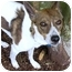 Photo 1 - Whippet Mix Dog for adoption in Portland, Oregon - Lovely Lily