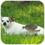 Photo 3 - Chihuahua Mix Dog for adoption in Owatonna, Minnesota - Paco