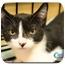 Photo 3 - Domestic Longhair Kitten for adoption in Yorba Linda, California - Ezio