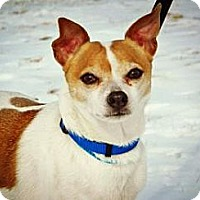 Adopt A Pet :: Jack - Cheyenne, WY