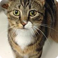 Adopt A Pet :: Claudia - western, MN
