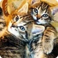 Adopt A Pet :: Bizou and Bentley - Pasadena, CA