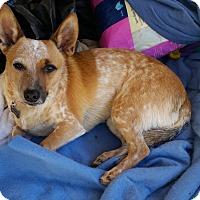 Adopt A Pet :: Abercrombie - Phoenix, AZ