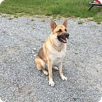 Adopt A Pet :: Ruger - Hamilton, MT
