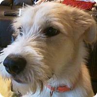 Adopt A Pet :: Rex - Normandy, TN