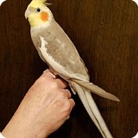Adopt A Pet :: Beamer & Bentley - St. Louis, MO