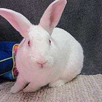 Adopt A Pet :: Killian - Newport, DE