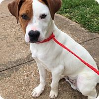 Adopt A Pet :: Gussy - Joliet, IL
