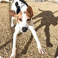 Adopt A Pet :: Buddy - Lexington, MA