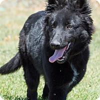 Adopt A Pet :: Kala - Patterson, CA