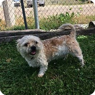 Terrier (Unknown Type, Small) Mix Dog for adoption in Janesville, Wisconsin - Amos
