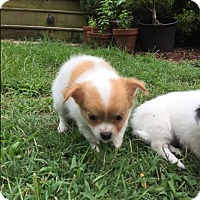 Adopt A Pet :: Charlie & Mollie - Raleigh, NC