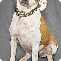 Adopt A Pet :: Tyra - Waynesboro, PA