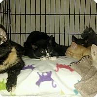 Adopt A Pet :: Sarah Smile - Columbus, OH