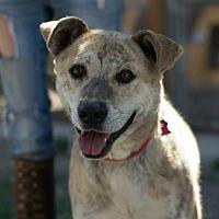 Adopt A Pet :: Tiger - Monte Vista, CO