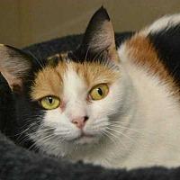 Adopt A Pet :: Chalupa - Mebane, NC