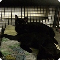 Adopt A Pet :: Hye - Byron Center, MI
