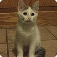 Adopt A Pet :: Inga - Richmond, VA
