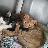 Adopt A Pet :: Duku - Chippewa Falls, WI