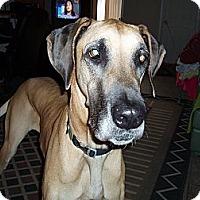 Adopt A Pet :: Pinky - Phoenix, AZ